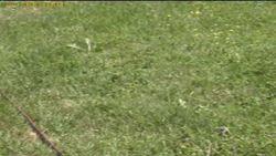 progetto campo irrigazione