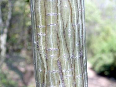 protezione tronco albero