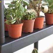 riparare bonsai e piante grasse in inverno