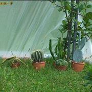 piante grasse inverno
