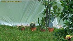 piante grasse in inverno