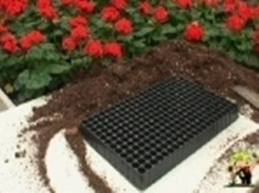 semina in contenitore multiforo