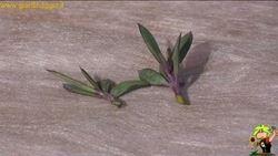 talee di succulente
