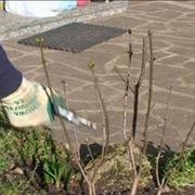 trapiantare un arbusto