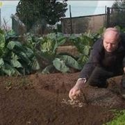 trapianto verdure invernali