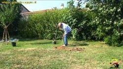 coltivare il melo