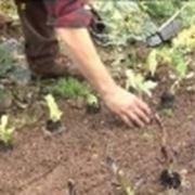 riparare il campo seminato