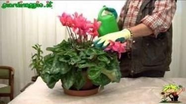 Concimare le piante