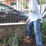 Fissare un arbusto a tutori